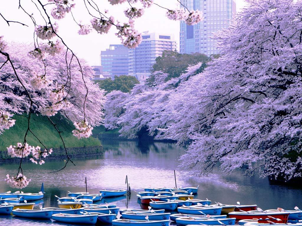 изображение картинка красота разные японии это мужчина
